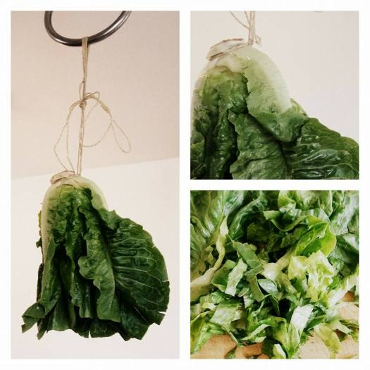 Lettuce suspended rope