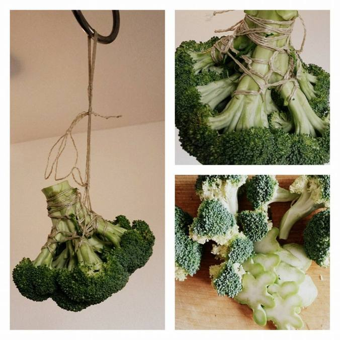 Broccoli suspended rope