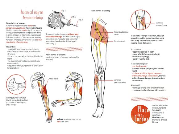 PDC nerve info sheet - printer